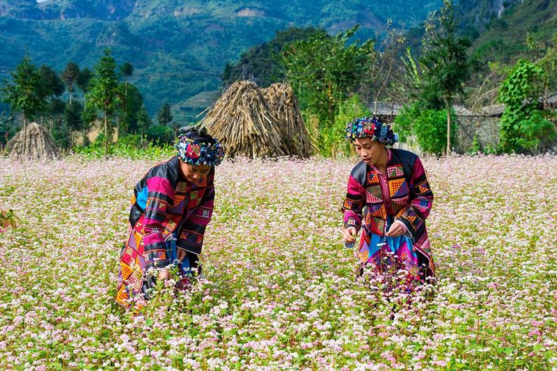 Ha Giang trekking tour