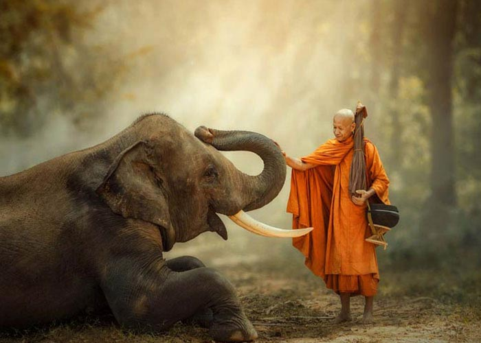 Ride Elephant