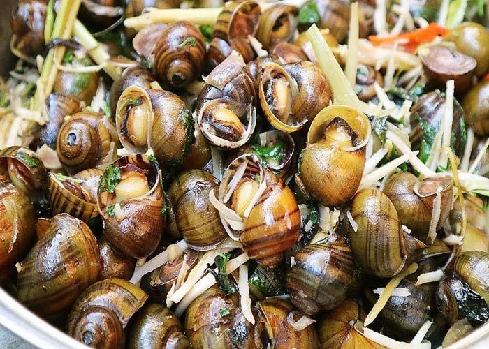 Halong Snails