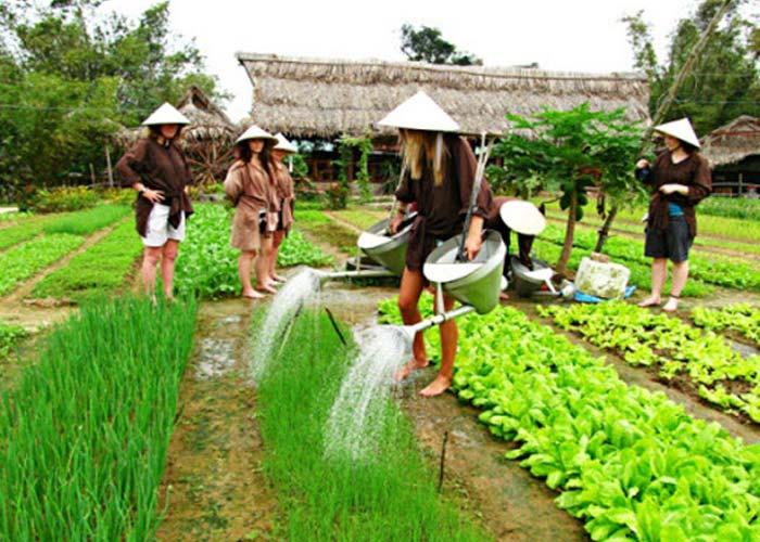 Tra Que herb village