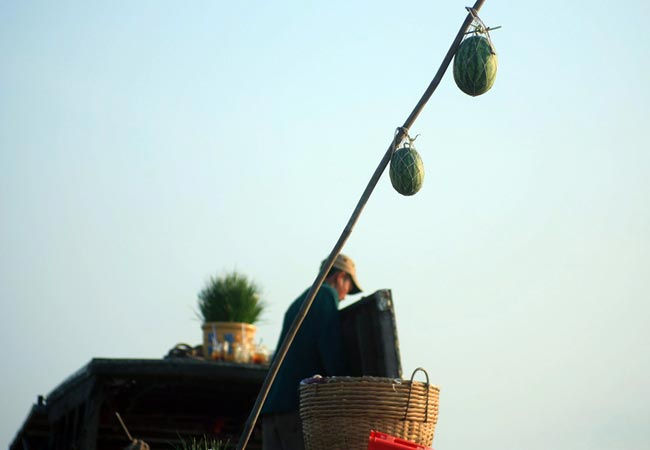 A bamboo stem hung up with watermelon